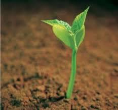 a-seed-hope2